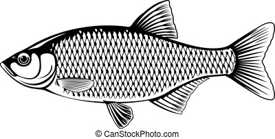 rudd, 白い魚, 黒