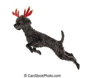 Rudolf the Reindeer - Rudolf the Black Nosed Reindeer. Black...