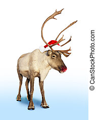 Rudolph red nose reindeer or caribou with Christmas hat