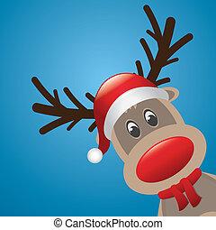 rudolph, rena, nariz, chapéu, echarpe, vermelho
