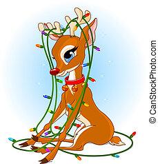 rudolph, weihnachtsbeleuchtung