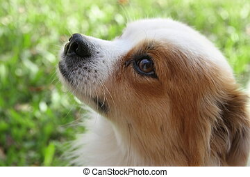 rue, chien, abandonnés, victime, de, abus animal