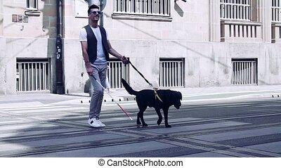 rue, chien blanc, aveugle, canne, travers, marche, homme,...