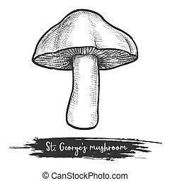 rue., illustration, vecteur, s, croquis, george, champignon