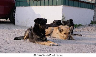rue, mensonge, quatre, chiens, stationnement, groupe, ...