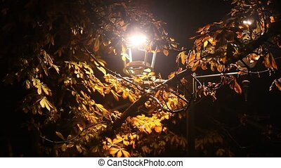 rue, nuit, arbre, châtaigne, parc, lampe