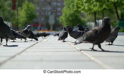 rue, pigeons, park., miettes, manger, pain