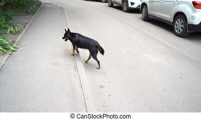 rue., recherche, hôtes, chien, errant, promenades
