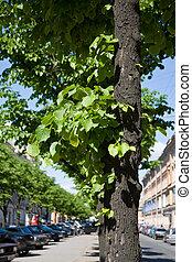 rue, vert