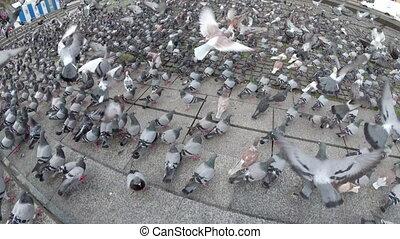 rue, vue, troupeau, pigeons, énorme, ville, sommet