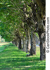 ruelle, arbres