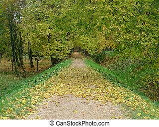ruelle, automne
