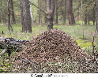 rufa,  -,  formica, hormiguero, hormiga, madera, rojo