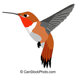Rufous Hummingbird Selasphorus rufus male Computer Painting