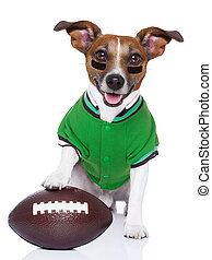 rugby dog  - sporty rugby dog with a big sport ball