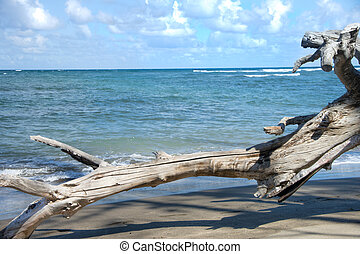 Rugged Hawaiian coastline with beautiful clouds and driftwood at Waihee Beach Park, Maui, Hawaii