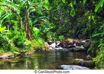Rugged mountain stream surrounded by lush tropical flora in the rainforest of Suva, Fiji