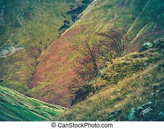Rugged Scottish Hillside