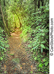 Rugged trail - Sheltowee Trace trail near Cumberland River ...