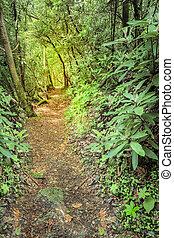 Rugged trail - Sheltowee Trace trail near Cumberland River...