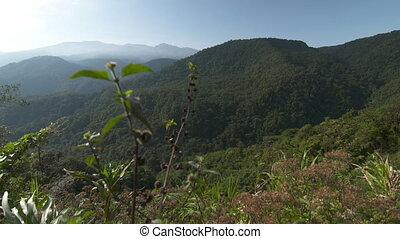 Rugged Tropical Rainforest, Costa Rica - Wide low-angle...