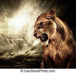 rugindo, leoa, contra, céu tempestuoso