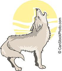 rugir, coyote