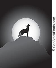 rugir, coyote, luna