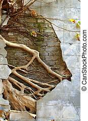 ruin concrete wall with big tree root