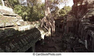 ruine, arbre, massif, temple, ancien, racines, pousser, cambodgien