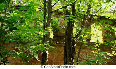 Ruined building in the forest closeup
