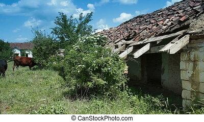 Ruined Cow Barn