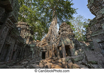 ruines, angkor, -, cambodge, cette, wat, prohm