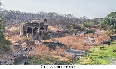 ruines, ranthambore, national, inde, parc, fort, rajasthan,...