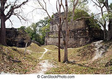ruines, tikal