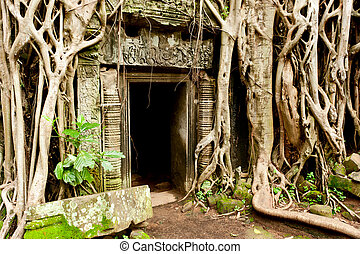 Ruins of the temples, Angkor Wat, Cambodia