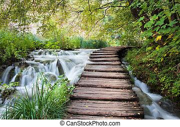 ruisseau, dans, les, forêt