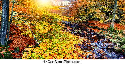 ruisseau, ensoleillé, forêt automne, diminuez jour, paysage
