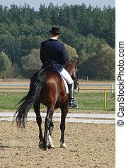 ruiter, sportsman, paardrijden, bruin paard, in, paddock