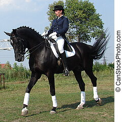 ruiter, vrouw, paardrijden, black , hengst, paarde