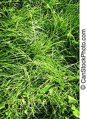 rumpled, grönt gräs, in, morgon, lätt