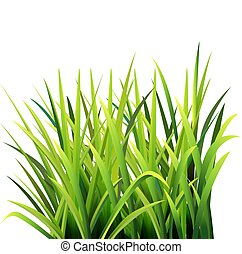 Rumput liar - Vector illustration of grass, seen from the ...