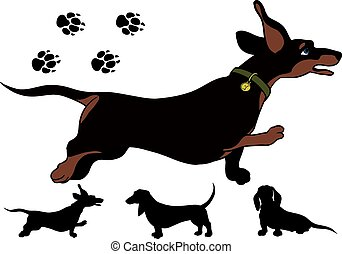 Run dachshund - funny running Shorthair dachshund highly...