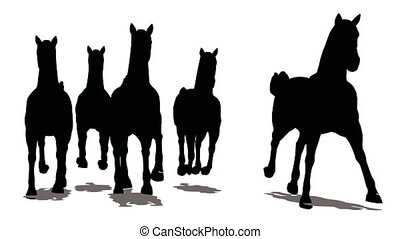 Run of herd of horses, the front view, black silhouette on white background