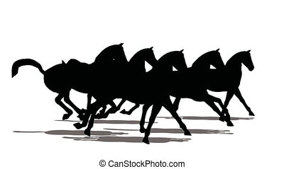 Run of small herd of horses, black silhouette on white...