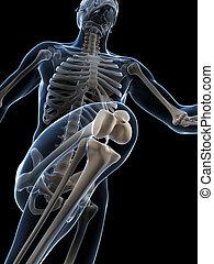 Runner anatomy - 3d rendered illustration - runner anatomy