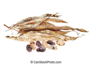 Runner bean seeds and husks - Runner bean seeds and dried ...