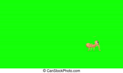 Running ant. Animated Motion Graphic with green screen chroma key.