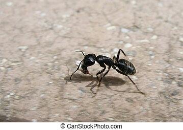 running ant