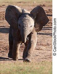 Running Baby Elephant